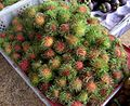 Rambutans au marché - Vietnam.jpg