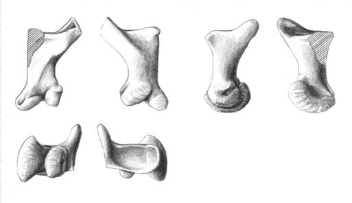 Manual bone