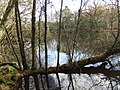 Ratherheath Small Tarn by David Brown.jpg