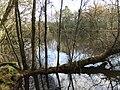 Ratherheath Small Tarn by David Brown.jpg