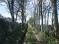 Red Gap Farm Lane - geograph.org.uk - 311153.jpg