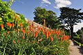 Red Hot Pokers, St Fagans castle - Cardiff - geograph.org.uk - 1458970.jpg
