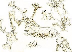 Reindeersvxd.jpg