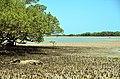 Reserva de Desenvolvimento Sustentável Estadual Ponta do Tubarão Jose Garcia Junior (06).jpg