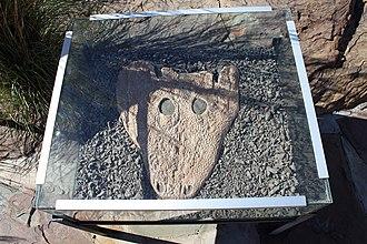 Rhinesuchus - Rhinesuchus skull in situ