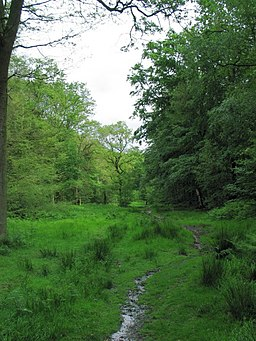 Ride on the 'Blue Route', Northaw Great Wood - geograph.org.uk - 448408