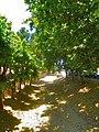 Riera de Montbrió del Camp - panoramio.jpg