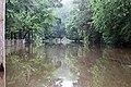 Roman Forest Flood Waters - 4-19-16 (26430635102).jpg