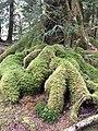 Roots (27519890306).jpg