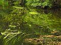 Rzeka Wda i trawa wodna - widok z kładki.jpg