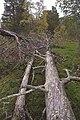 Sádis (Satis) - KMB - 16000300032195.jpg
