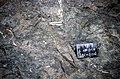 S of Mt Jackson aplite fragments in gabbro breccia.jpg