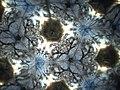 Sakura Teleidoscope 1 (6959695112).jpg