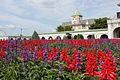 Salvia splendens (21837923545).jpg