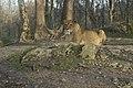 Salzburg Zoo 0367 (8348282073).jpg