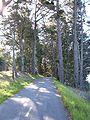 San Andreas Trail 2.JPG