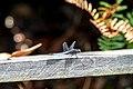 Sandakan Sabah Elopura-Recreation-Park-08.jpg
