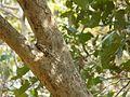 Sauasaua (in Bisayan) (3276710874).jpg