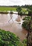 Scenic Mekong Delta in Vietnam (9147955699).jpg