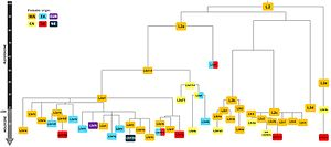 Haplogroup L2 (mtDNA) - Phylogenetic tree of haplogroup L2 subclades. Numbers in the left side bar represents estimated time in thousand years ago. Colour scheme corresponding to the probable origin of each clade.