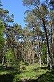 Schleswig-Holstein, Bark, Naturschutzgebiet 30 NIK 4198.JPG