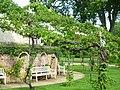 Schloss Charlottenhof, Wein an den Außenanlagen, Park Sanssouci.jpg