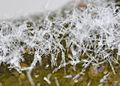 Schneekristalle-Goettingen03.jpg