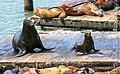 Sea Lions On The Dock (29058397).jpeg
