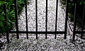 Secret Garden (1454109726).jpg