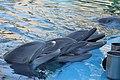 Secret Garden Dolphins Being Fed After Performance 2.jpg