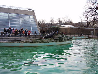 Wilhelma - Sea lion pool, aquarium in background