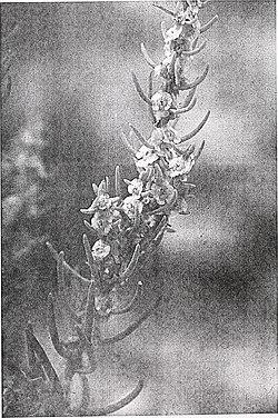 Sensitive plant species surveys, Butte District, Beaverhead and Madison Counties, Montana (1996) (20324221949).jpg