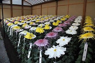 Shinjuku Gyo-en - Chrysanthemum flower exhibition