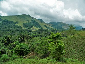 Western Ghats - Sholas, part of the rain forests