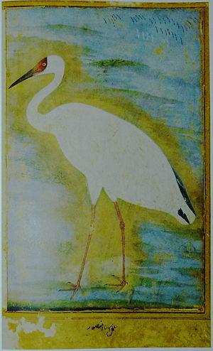 Siberian crane - Mughal era painting of a Siberian crane by Ustad Mansur (c. 1625).