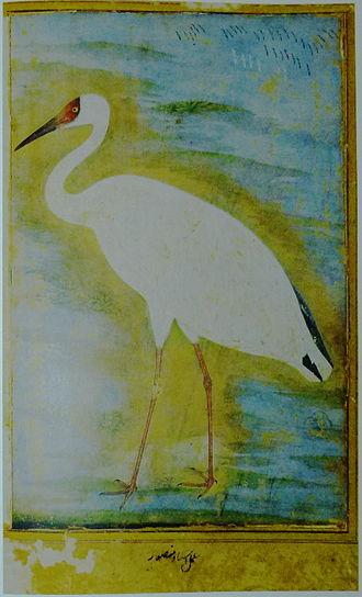 Ustad Mansur - Siberian crane (c. 1625)