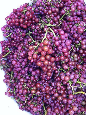 Siegerrebe - Image: Siegerrebe grapes