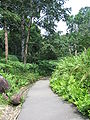 Singapore Botanic Gardens, Evolution Garden 10, Sep 06.JPG