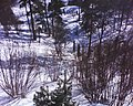 Skats no Špakovska parka skatu torņa - panoramio - Romāns Kolduns.jpg