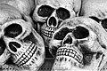 Skulls (13878390204).jpg