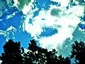 Sky and trees - panoramio (1).jpg
