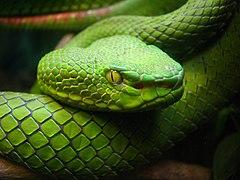Snake Eye - Flickr - Care SMC.jpg