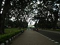 Snap from Lalbagh Flower Show Aug 2013 7838.JPG