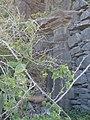 Solar do Agrela, Caniço de Baixo, Madeira - 1 Aug 2012 - DSC03463.JPG