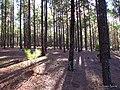 Sombra entre los árboles - panoramio.jpg