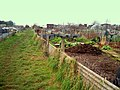Sowden Lane Allotments - geograph.org.uk - 1119915.jpg