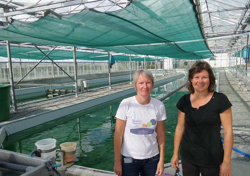 La société Scirsée produit de la spiruline en Normandie toute l'année en récupérant la chaleur dissipée lors de la conversion du biogaz (issu de la fermentation de déchets agricoles) en énergie électrique.