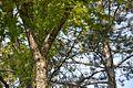 Spomen park Bubanj - Niš 21.jpg