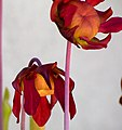 Spring Flowers (26430624976).jpg