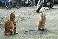 Spring cats (16365424864).jpg